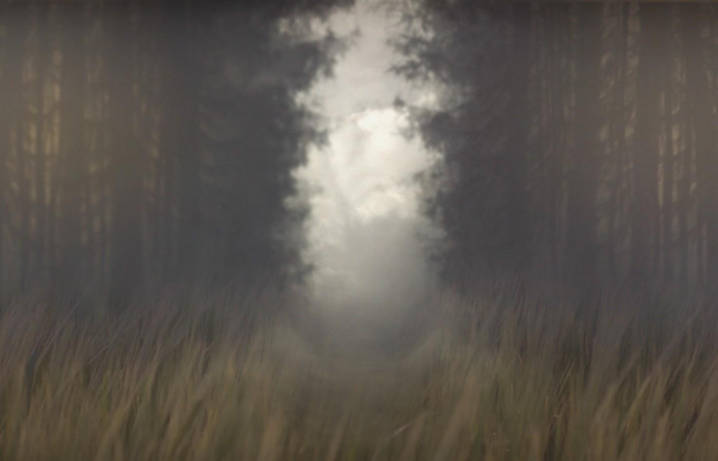 forsaken forest1